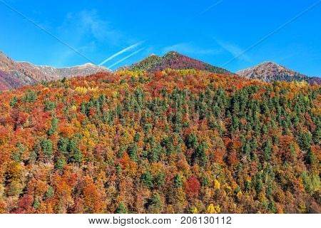 Colorful autumnal trees grow on mountains under blue sky in Switzerland.