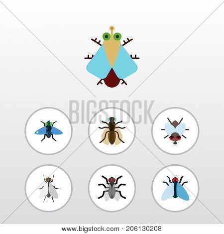 Flat Icon Fly Set Of Buzz, Dung, Housefly And Other Vector Objects