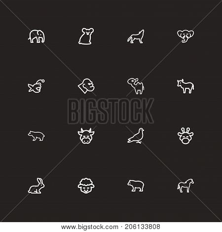 Set Of 16 Editable Zoo Outline Icons. Includes Symbols Such As Trunked, Pigeon, Wolf And More