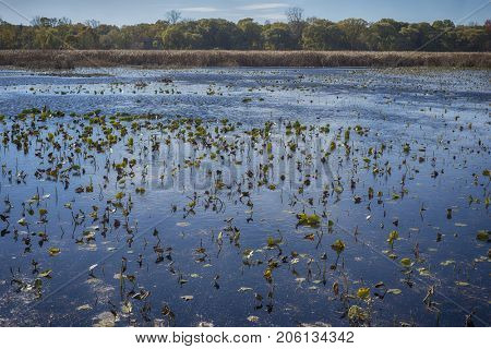 Wetland landscape on Point Pelee conservation area in Ontario, Canada in the fall (November)  poster
