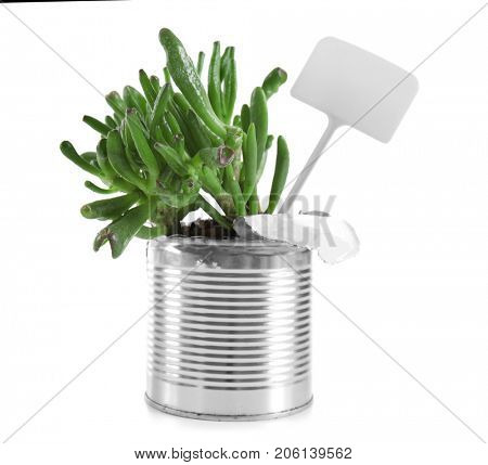 Young green plant with nameplate in tin can isolated on white. Recycling garbage concept