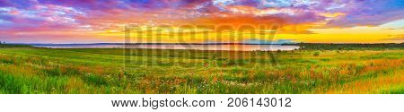 Sunset over the river Kama. Flowers meadow on the foreground. Panorama