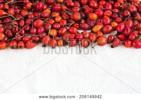 fall, harvesting, diet concept. top half of the photo is full of bright crimson, red and orange berries that was collected from rosehip, and lower half is negative space for text