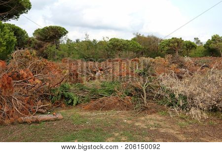 Trees Fell After The Passage Of The Powerful Tornado