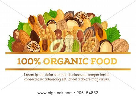 Organic food banner made of nuts. Vegetarian or vegan nutrition ingredients like nutmeg, walnut and hazelnut, pine. Half opened cuisine in shell with kernel. Grocery market or shop advertising theme