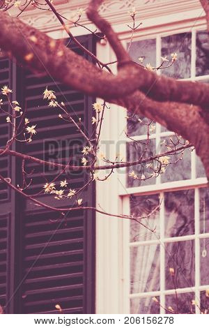 An old window is seen past budding spring trees.