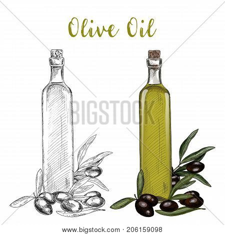 Glassware bottle with oil liquid and branch with olive berries and leaves. Sketch of vegetarian or veggie, vegan product in bottle with cork. Organic and natural, healthy food, garden, nutrition theme