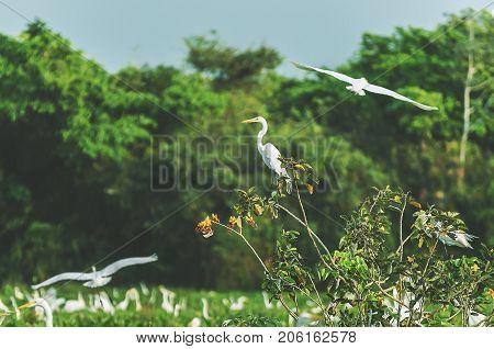 White Egret On A Tree Branch In Pantanal, Brazil