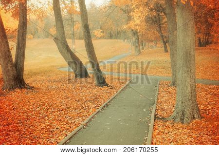 Autumn background. Autumn park alley in cloudy weather. Bare autumn trees and orange fallen autumn leaves. Foggy autumn background - autumn colorful park. Autumn park nature. Autumn background