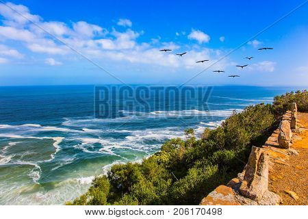 Mysterious South Africa. Place where two oceans meet. Triangular flock of migratory birds over the surf. The concept of extreme and exotic tourism