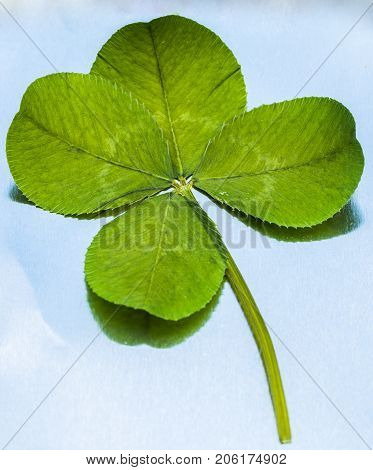 Vertical closeup photo of a single green four leaf clover against a metallic background
