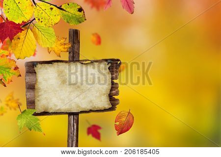 Falling autumn leaves background with copy space.