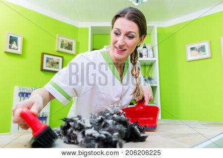 Hair being swept away with brush at dog or pet grooming parlor