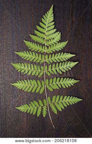 Fern leaf on dark oak plank