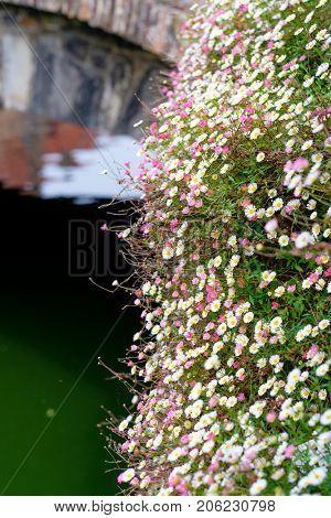 Beautiful flowers field at Bruges (Brugge) with water canal and bridge, Flanders, Belgium, spring season.