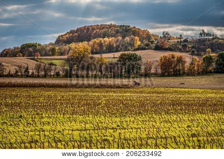 Autumn in Wisconsin, harvested cornfield with horseback rider in background, focus on cornfield in foreground