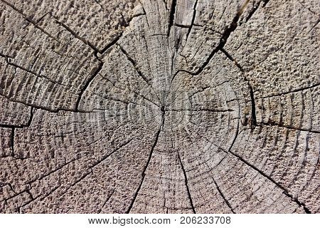 Rustic weathered radial lined wood background texture