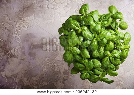 Large green aromatic Mediterranean basil leaves on rustic stone background with place for text. Aromatic spice. Copy space.