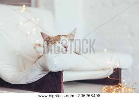 Kitten sleeps on small leather couch in white interior. Cozy furniture for pet. Cat's place organization at home.