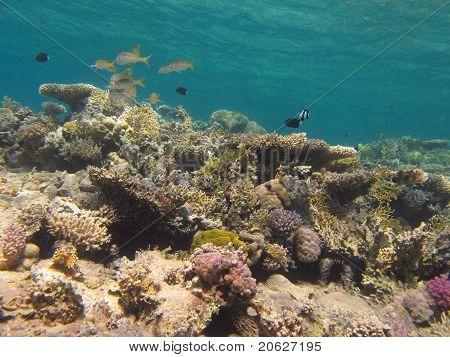 Korallenriff und klarem, blauem Wasser