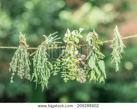 Bundles of flavoured herbs drying on the open air. Nature background.
