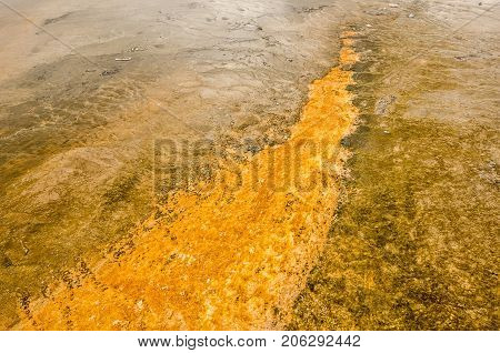 Heat-loving microorganisms called thermophiles cause the yellow orange and brown colors that line the runoff channels in Midway Geyser Basin near Grand Prismatic Spring in Yellowstone National Park