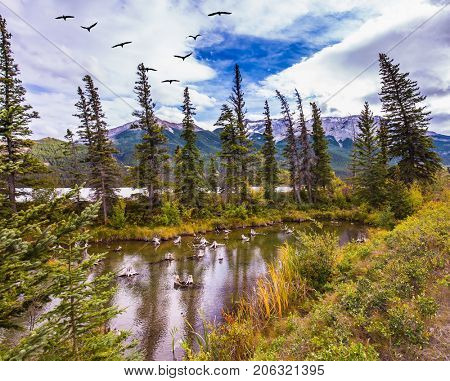 Grandiose landscape in the Rocky Mountains. A flock of migratory birds flies over the valley. The concept of ecological and active tourism