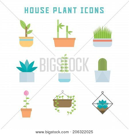 House plant icons in flat style for your home projects or botany publications.