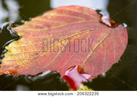 autumn leaves in water, leaves in an autumn brook,