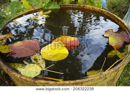 autumn leaves in water, leaves in a barrel,