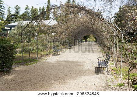 Wisteria Arbor (off Season)