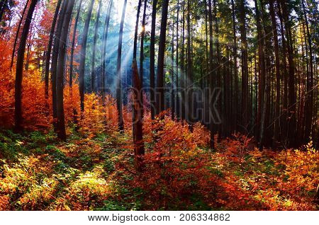 Warm autumn scenery in the forest, with the sun casting beautiful rays of light through the mist and trees