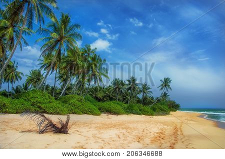 Tropical beach with palms.Beach and tropical sea. Paradise idyllic beach Sri Lanka. Beautiful Sri Lanka landscape. Exotic water landscape with clouds on horizon. Summer holidays. Ocean shore in the evening as nature travel background.