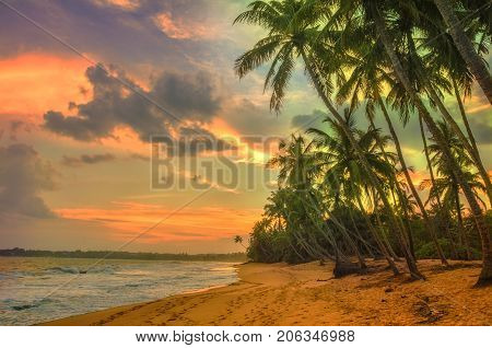 Tropical beach with palms.Beach and tropical sea.Sunset over the coconut palms. Paradise idyllic beach Sri Lanka. Beautiful Sri Lanka landscape. Exotic water landscape with clouds on horizon. Summer holidays. Ocean shore in the evening as nature travel ba