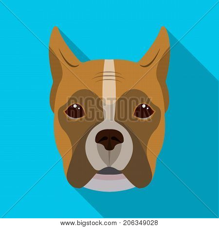 A dog, a breed of boxer.Muzzle of a boxer single icon in flat style vector symbol stock illustration .