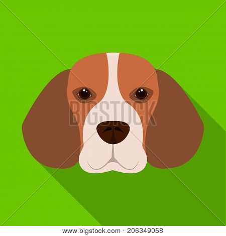 Breed dog beagle..Muzzle beagle single icon in flat style vector symbol stock illustration .