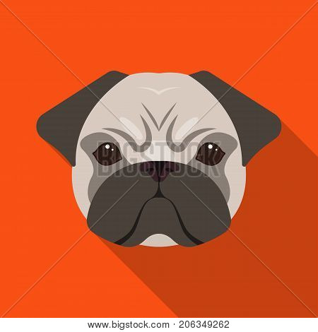 Breed of a dog, a pug.Pug's muzzle single icon in flat style vector symbol stock illustration .