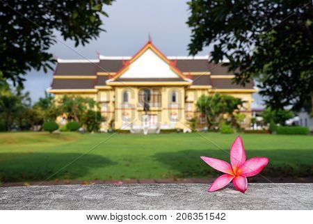 Pink plumeria flower on concrete fence with background of blurred National museum of Nan province Thailand