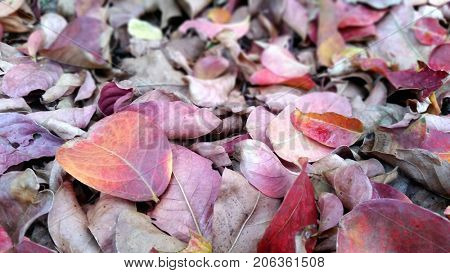 Soft Focus Autumn Leaves
