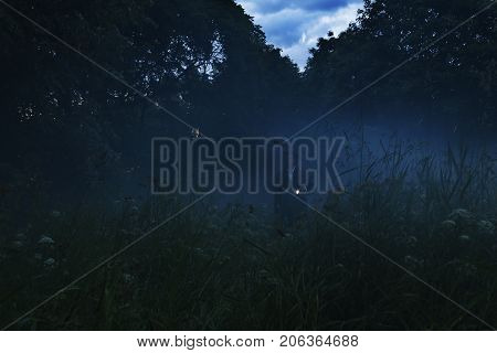 Lonely man with flashlight wandering in vague forest landscape. Mysterious light in gloomy dark field with mist between trees and grass.Horror moment in foggy forest. Dark man silhouette on the trail. Soft focus.