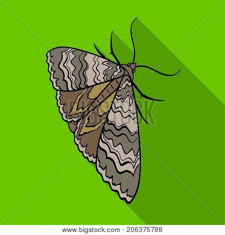 Moth, night butterfly. Insect pest moth single icon in flat style vector symbol stock isometric illustration .