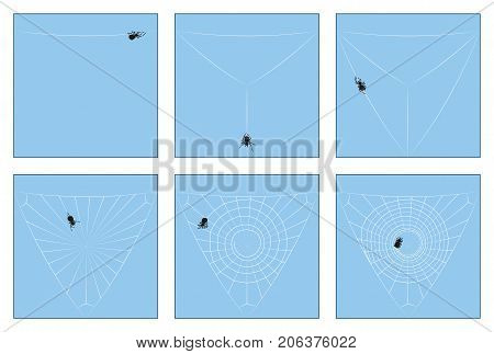Spider web - construction manual in six stages from the first spinning thread to the complete orb web, depicted step by step. Isolated vector illustration.