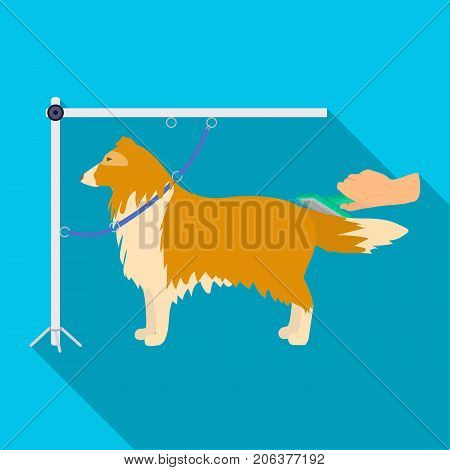 Combing a pet's fur, a dog in a stylish salon. Pet , dog care single icon in flat style vector symbol stock illustration .