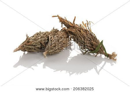 Three Bagworms Lying On Each Other