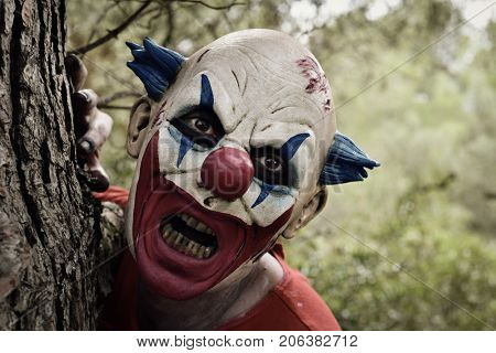 closeup of a scary evil clown wearing a dirty costume, popping in from behind a tree in the woods