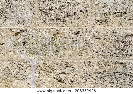 full frame abstract porousshell limestone wall detail