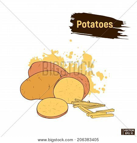 Potato Colored Sketch Hand Drawing