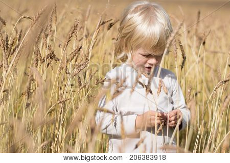 Blond Slavic happy kid boy at a ripe rye wheat field, autumn harvest, Russia, the Urals