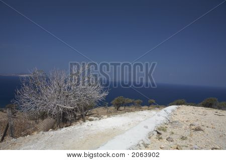 White Tree In Front Of The Ocean