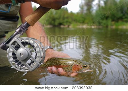 Closeup of rainbow trout caught by fly fisherman
